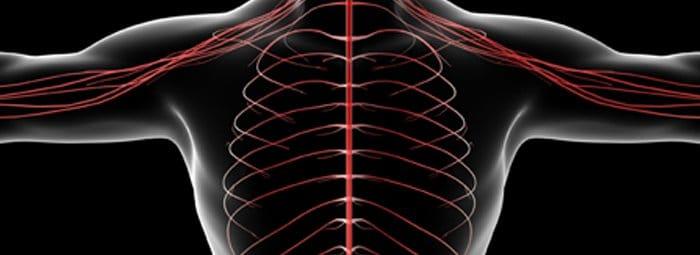 illustrazione dinamica scheletro umano